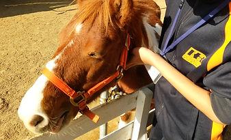 馬とのふれあい 馬のあたたかさ
