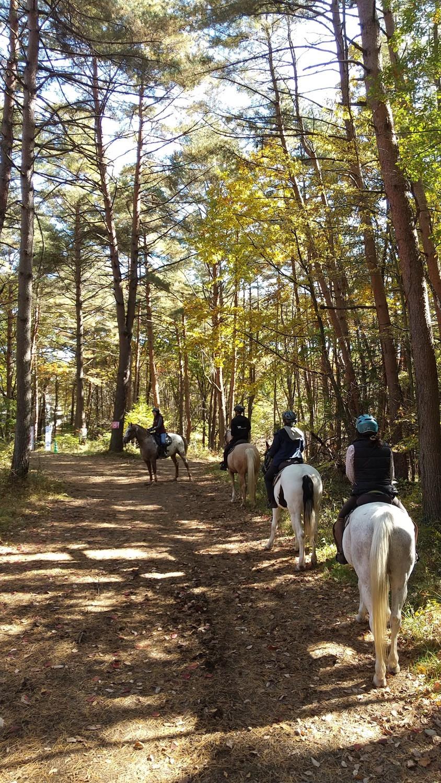 人生初の外乗 林の中を馬で行く