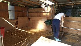 馬小屋・厩舎の掃除