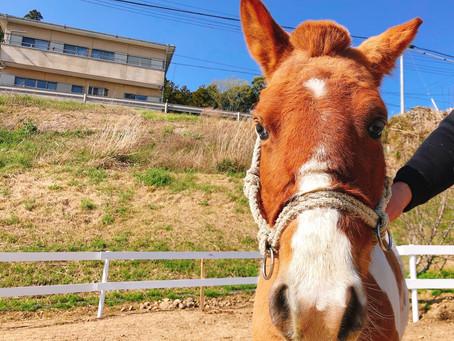馬もチャンとセリフ聞いてるんですよw
