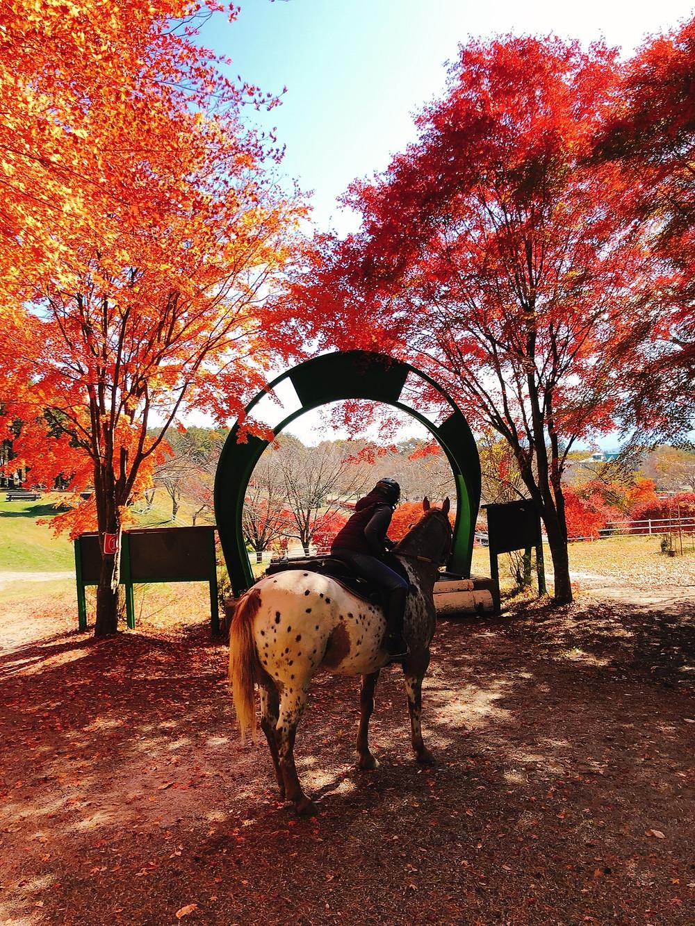 人生初の外乗 紅葉と馬