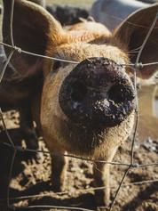 Sturgeon County 2020 - Manawan Farms Hap