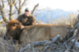 Cow Elk Hunt