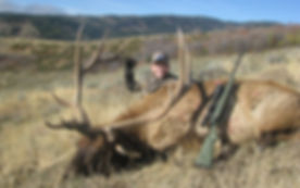 Youth Bull Elk