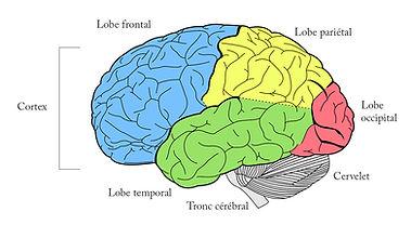 brain-1007686_960_720.jpg