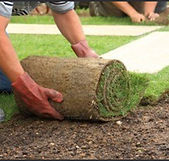 Commercial Sod Placement Service