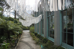 Wedding walkway to the Fern House