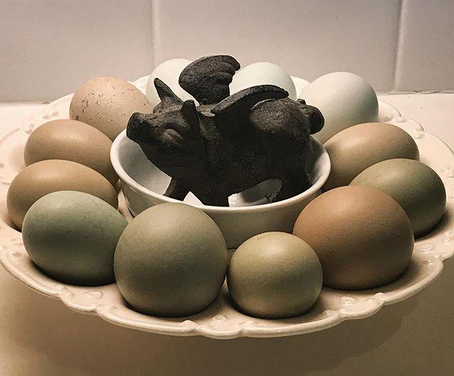 Gotta love a good batch of green eggs! #greeneggsandham #colorfuleggs #colorfuleggbasket #oliveegger