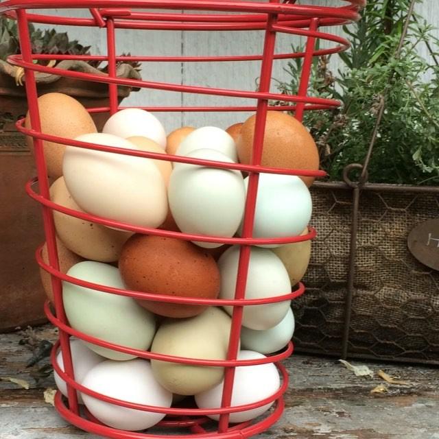 Fun Chicken Fact_ A hen will consume 4lbs