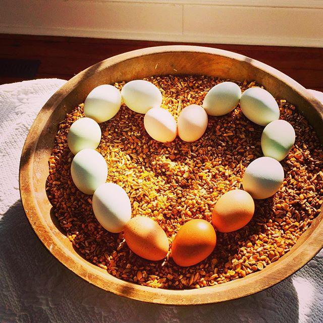 Better Feed = Better Eggs! #nongmograins #cedarcrestfarmandfeed #nongmofeed #pastureraised #pasturer