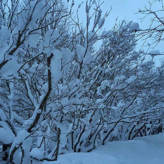 My walk to the coops ~~God's art needs No Filter!_#winterquiet #winteronthefarm #coopedup #cedarcres
