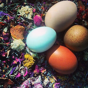 Fancy Flock Nest Box Herbs