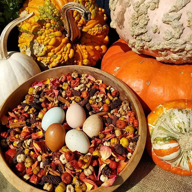 Maple Pumpkin _Fancy Flock Herbs_ to spice up your coop! Free surprise gift with purchase of every b