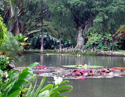 Gardens of Buenos Aires 1