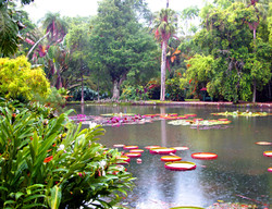 Gardens of Buenos Aires 2