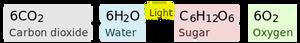 Photosynthesis chemical reaction formula