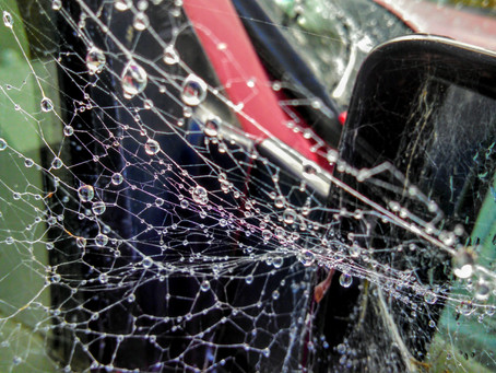 Raindrops on Spiderwebs