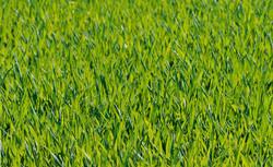 grass-meadow-green-forest
