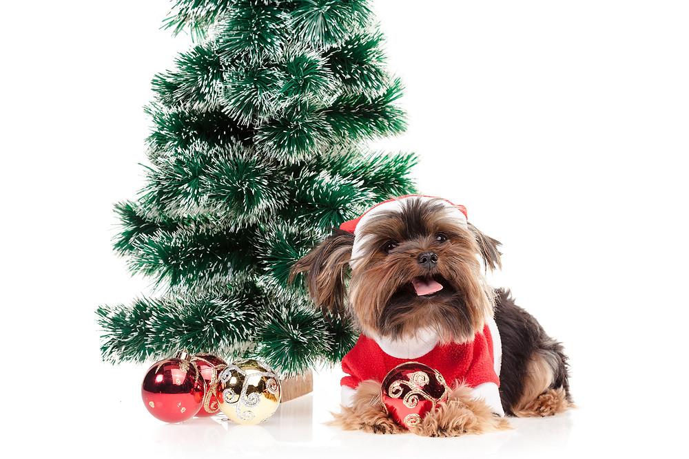 2018 год, год собаки. Елка, шарики, нарядный щенок