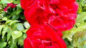 【大輪の華よ咲き誇れ】