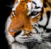 animal-2923186_1920.jpg