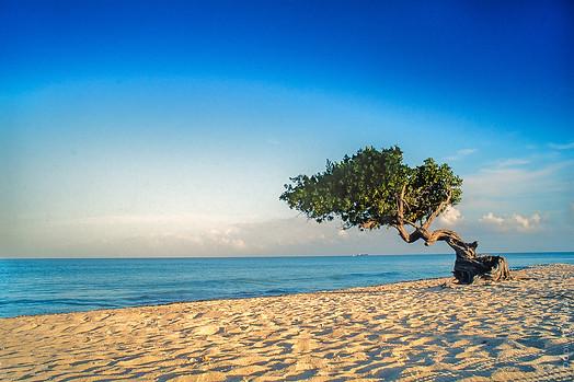 Divi Tree