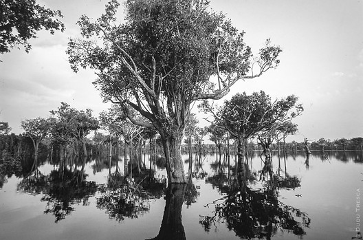 Ananvilhanas - Rio Negro - AM - Brasil