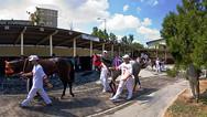 Gazi Race