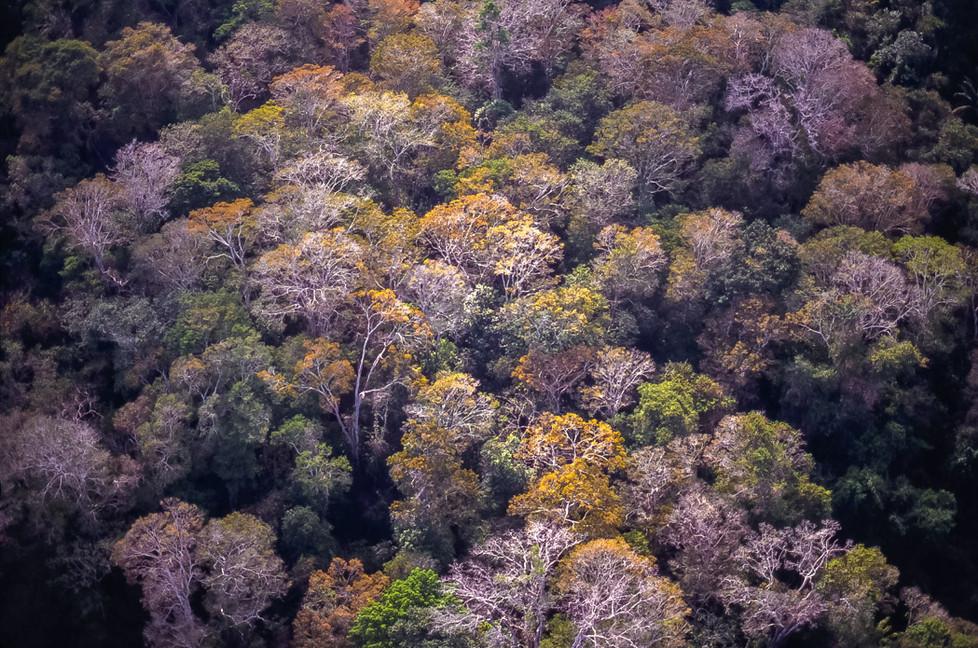 Amazonia A4