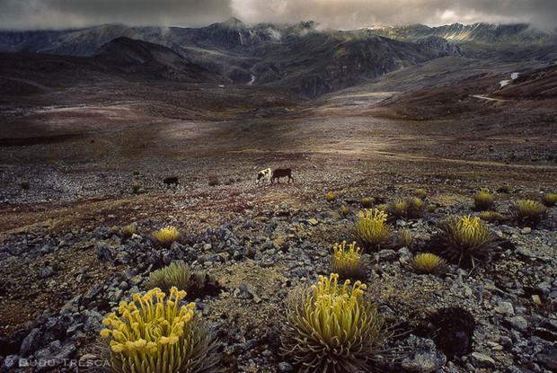 Sierra Nevada - Venezuela