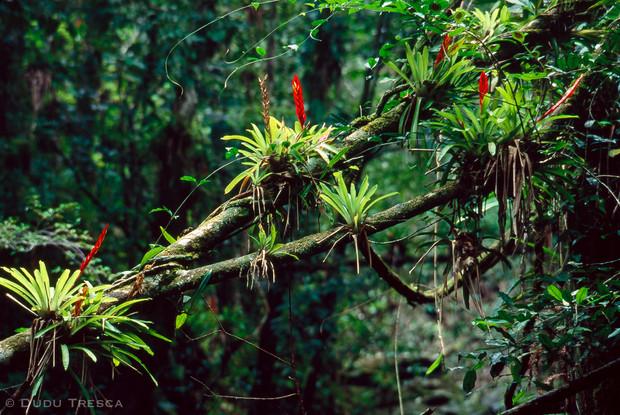 Bromélia - Bromeliads