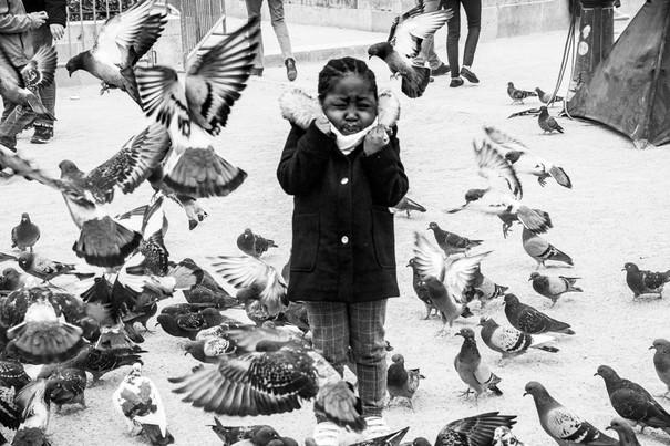 Pigeons de Notre Dame