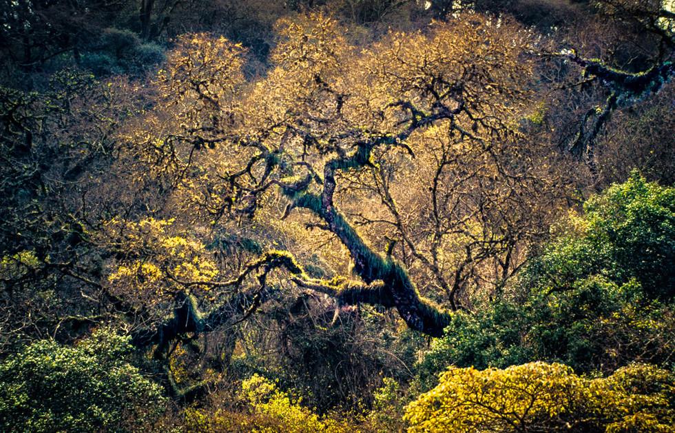 Parque Nacional Calilegua A4