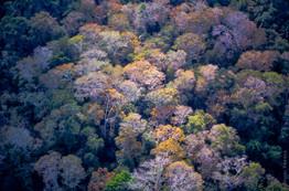 Coconut tree - Genipabu - RN - Brasil