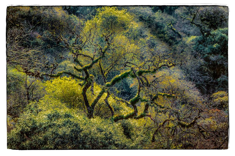 Parque Nacional Calilegua A4 b