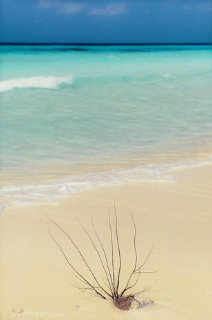 Divi beach - Aruba