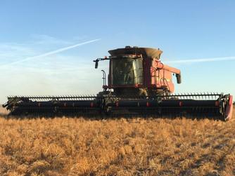 Harvest 2019 (1).jpg