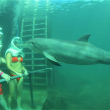 Snuba with dolphins in Mexico!