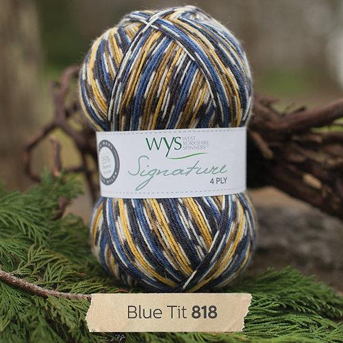 818 Blue Tit