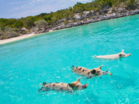 Virtual Vacations - Great Exuma, Bahamas