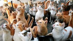 House & Cat Overnight Stays