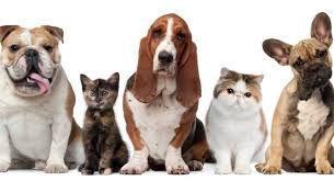 House & Pet Sitting Overnight Stays