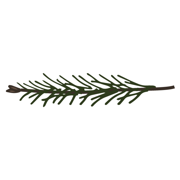 Pine Spruce Branches 11
