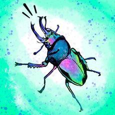 'Belligerent Beetle'
