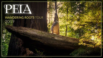 Peia Wandering Roots Tour cover template