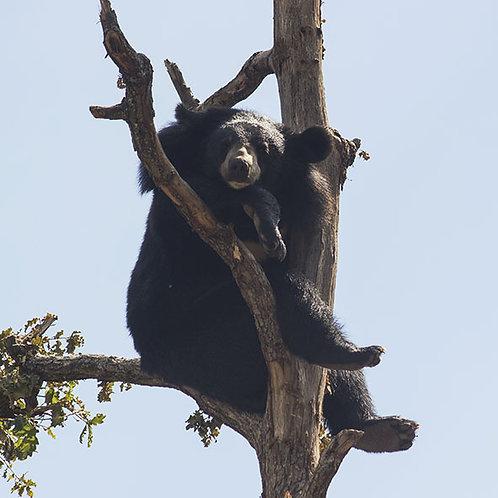 Rencontre privilège ours