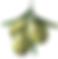 ulivo-pianta-png-1.png