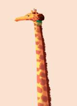 giraffe_chloe