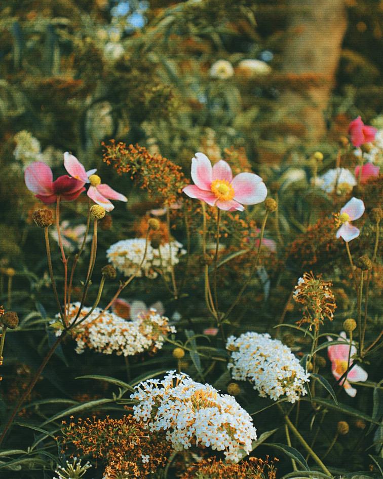 Danish Flowers in Spring
