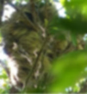 sleeping_sloth-277x300.jpg
